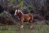 one horse pasturing on top of the mountain at Riaño region, Leon