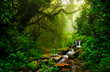 Leinwanddruck Bild - Asian tropical rainforest