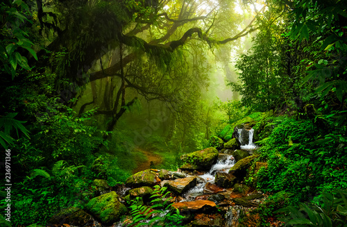 Leinwanddruck Bild Asian tropical rainforest