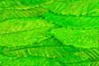 Leinwandbild Motiv Abstract background with dry leaves of chestnut tree