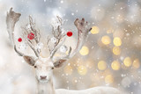 Portrait of Christmas santa white fallow deer.