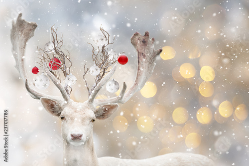 Portrait of Christmas santa white fallow deer. - 237017786