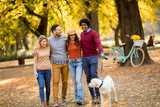 Multiracial people walking in the park with dog - 237023140