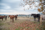 Herd of horses stand on scenic farm overlook - 237056709