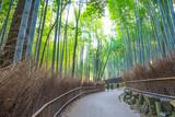 Fototapeta Bambus - 京都 竹林の風景 © beeboys