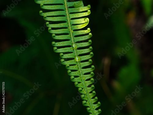 Closeup fern leaves in a tropical rain forest, Phetchaburi, Thailand