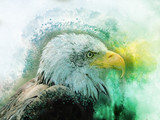 Eagle america bird watercolor painting symbol predator - 237129321