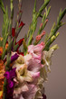 Bunch of beautiful multicolored gladiolus flowers. Bloom, romance.