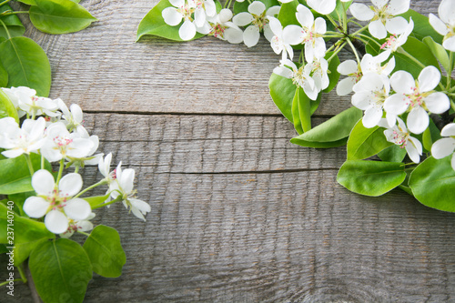 Spring blossoming branches of a fruit flower on a wooden board. Copy space.