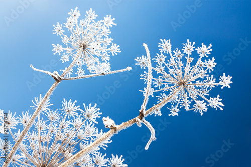 Leinwanddruck Bild abstract flowers in frost on blue sky background