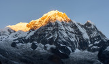 Close-up view of Annapurna South montain peak against clear blue sky during sunrise ( golden hour) in the Himalayas - 237146941