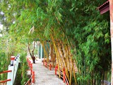 The cement walkway with red corridor and bamboo in Nan, Thailand