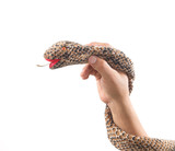 hand holding Snake toy made from brown fabric isolated on white background.