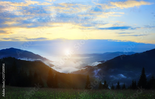 Coniferous dark forest in the fog in the mountains at dawn.. Mystical vintage look.
