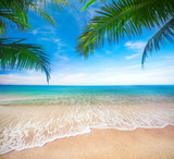tropical beach with coconut palm - 237261304