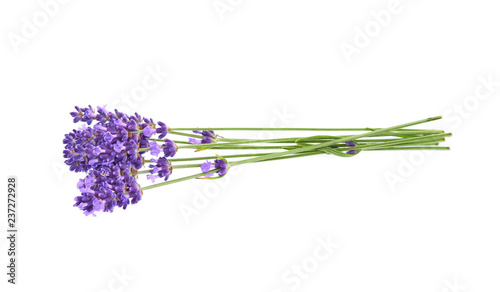 Lavender flowers isolated on white background.  - 237272928