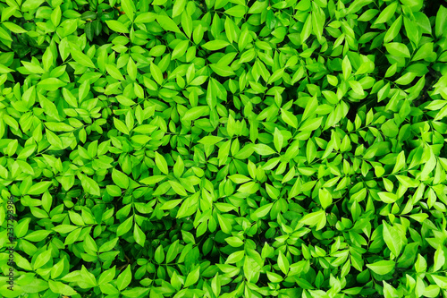 lush green leaves background - 237293986