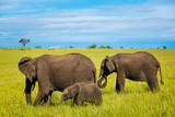 Group of african elephants walking on the savannah