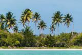 Saona Island near Punta Cana, Dominican Republic - 237325946