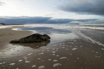 Stranded © Cato Johan Rød