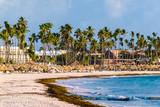 Bavaro Beaches in Punta Cana, Dominican Republic - 237330798