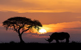 Africa wildlife and wilderness concept