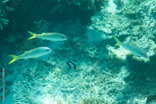 Reef with marine animals fish in ocean sea