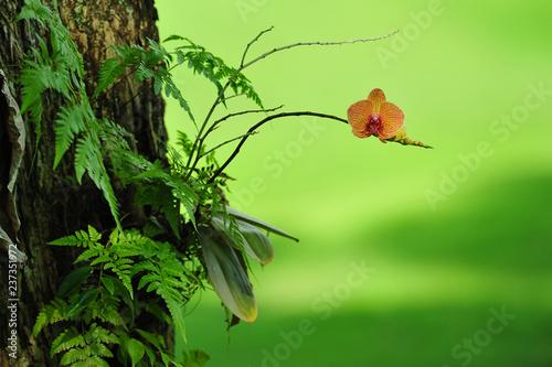 Orange orchid o the garden - 237351972