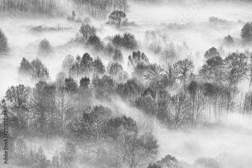 Foresta con nebbia al mattino - 237352586