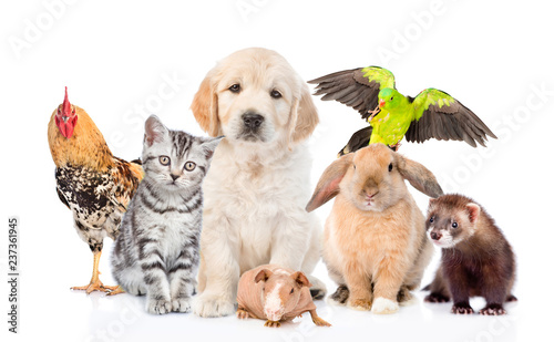 Leinwandbild Motiv Large group of pets together in front view. Isolated on white background