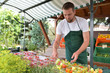 Leinwanddruck Bild - Gardener at the sales counter for fruit and vegetables fresh after the harvest from the grower