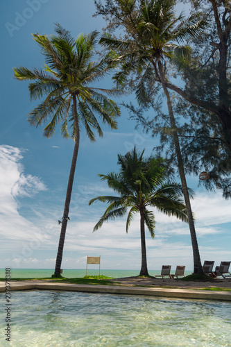 Palm tree leaf on the beach  - 237378388