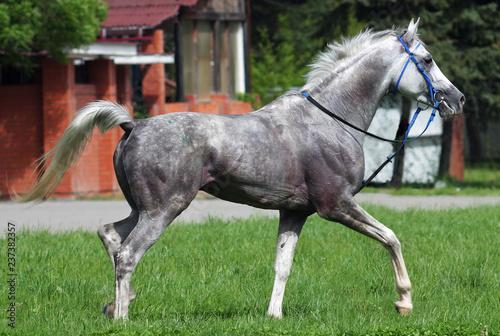 Beautiful horse.