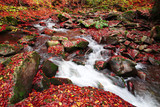Brook in a beech forest in autumn - 237382750
