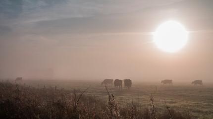 Mystischer Sonnenaufgang - Nebel im September - Natürlicher Hintergrund