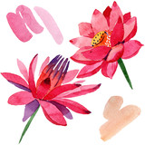 Red lotus flower. Isolated lotus illustration element. Watercolor background illustration set.