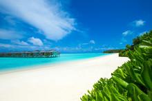 """Постер, картина, фотообои """"tropical beach in Maldives with few palm trees and blue lagoon"""""""