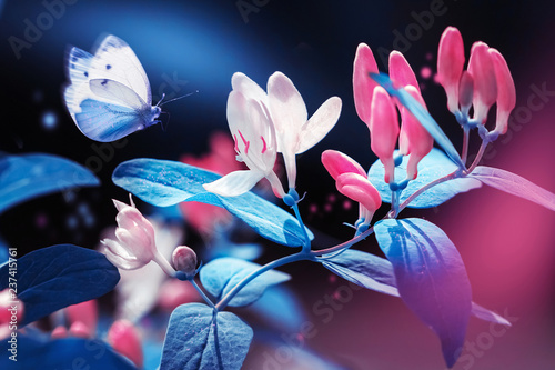 Spring and summer natural background. Beautiful blue butterfly on a background of pink flowers and buds in the spring garden. Plastic pink and ultraviolet colors.