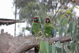 Fotos de aves varias naturaleza