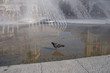 Leinwandbild Motiv Streetlife München: Tauben am Stachus-Brunnen