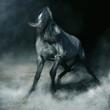 Arabian horse in dynamics, koń Arabski