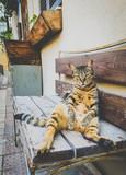 chillende Katze die auf einer Bank in Tel Aviv in Israel ruht