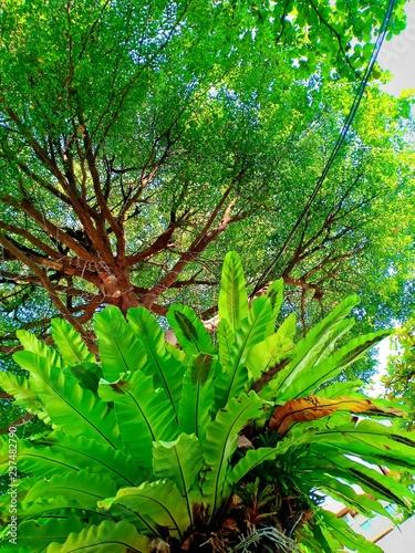 Green tree park vol.3 - 237482790