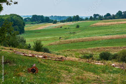 Summer landscape in the countryside. Field with green grass. Forest on the horizon. Ukraine Vinnytsia region. - 237484961
