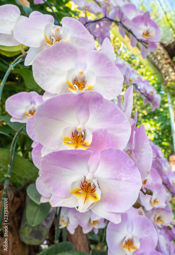 Beautiful purple and white orchid flower on nature background