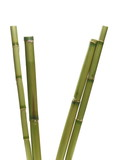 Fototapeta Bambus - Green bamboo sticks isolated on white background with clipping path © dule964