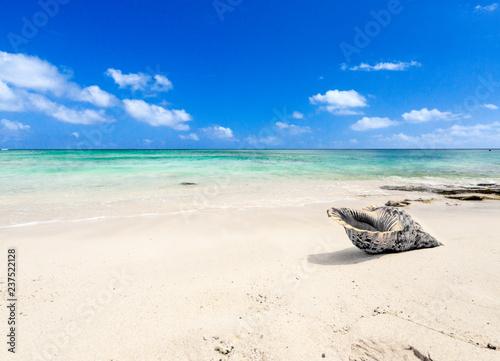 Coquillage sur plage mauricienne  - 237522128