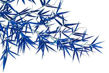 Bambou bleu  © Unclesam