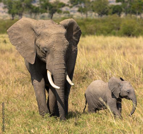 Elefanten: Mutter-Kind-Beziehung