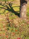 初冬の桜の木風景 - 237554383